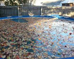 Preventing Fall Leaf Damage to Your Swimming Pool
